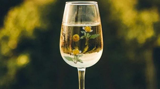 Cientistas fabricam vinho e queijo a partir de erva daninha